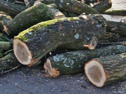 felled_tree_trunks_wood_forest_diseased_trees_woodworks_like_log_sawed_off-835835.jpg!d