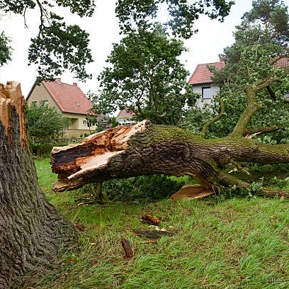 tree storm damage
