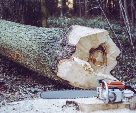 Cut tree2